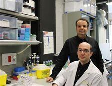 farmaco-pancreas-humanos