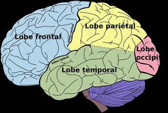 envejecimiento-cerebro