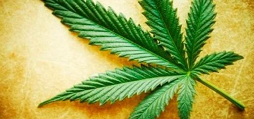 marihuana-2012-11-15-51583