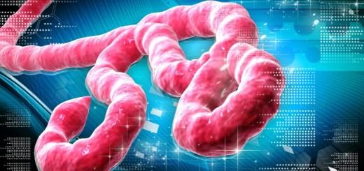 ebola-has-killed-69-guinea-january