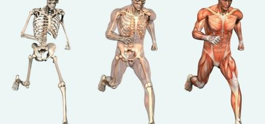 mitos-cuerpo-humano